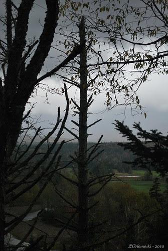Dark Skies & Trees