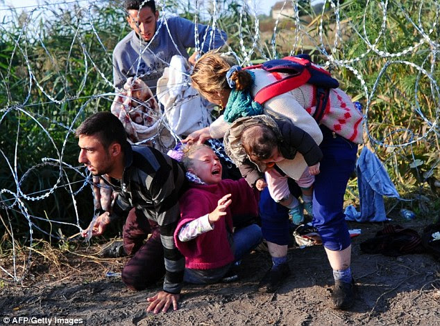 A young girl's hair becomes stuck in barbed wire while crawling through a fence with her family into Hungary from Serbia near Roszke as thousands of migrants pour across the border seeking a better life in Europe