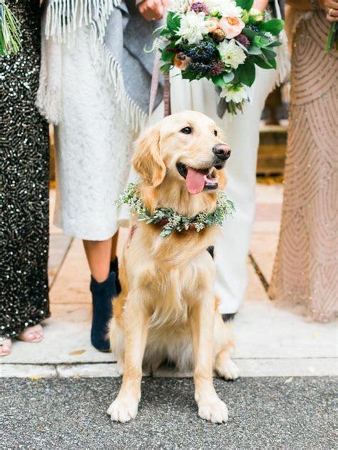 25  Best Ideas about Golden Retriever Wedding on Pinterest