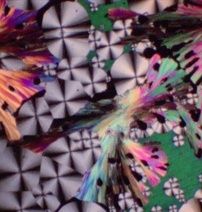 Jean Painlevé, Phase Transition in Liquid Crystals [Transition de Phase dans les Cristaux Liquides]