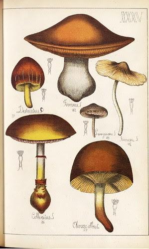 Firmus, Desbuetus, Collinitus et spp.