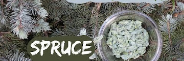 Spruce Tips Free Download Youtube Mp3 and Mp4