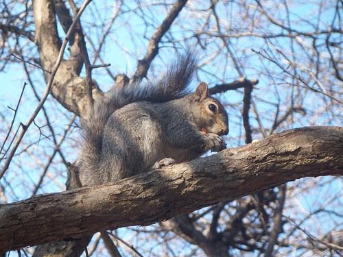 3.22.2009 Chicago Natura (13)