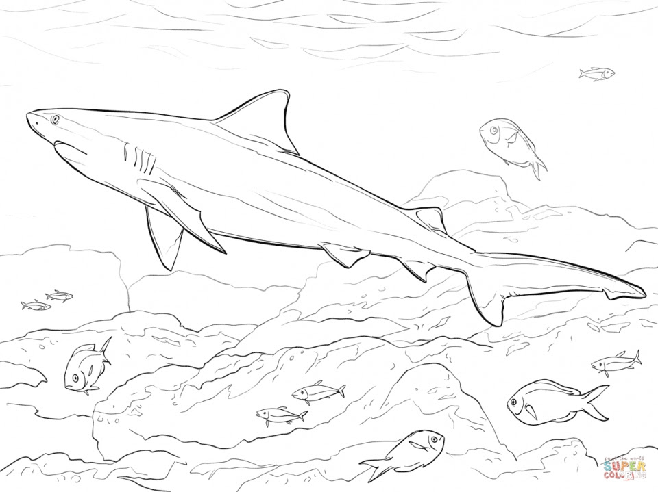 20+ Free Printable Shark Coloring Pages - EverFreeColoring.com