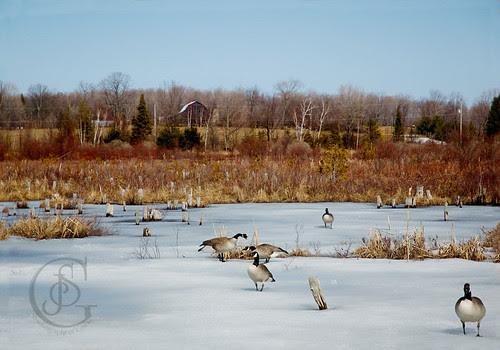 Langman Sanctuary - Icy Pond