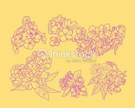 Set Dibujo Línea Arte De Flores De Cerezos En Flor Y Rama Arte