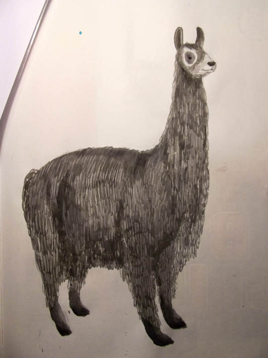 llama almost finished