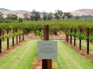 Grenache Vineyard of Barossa Valley, Australia