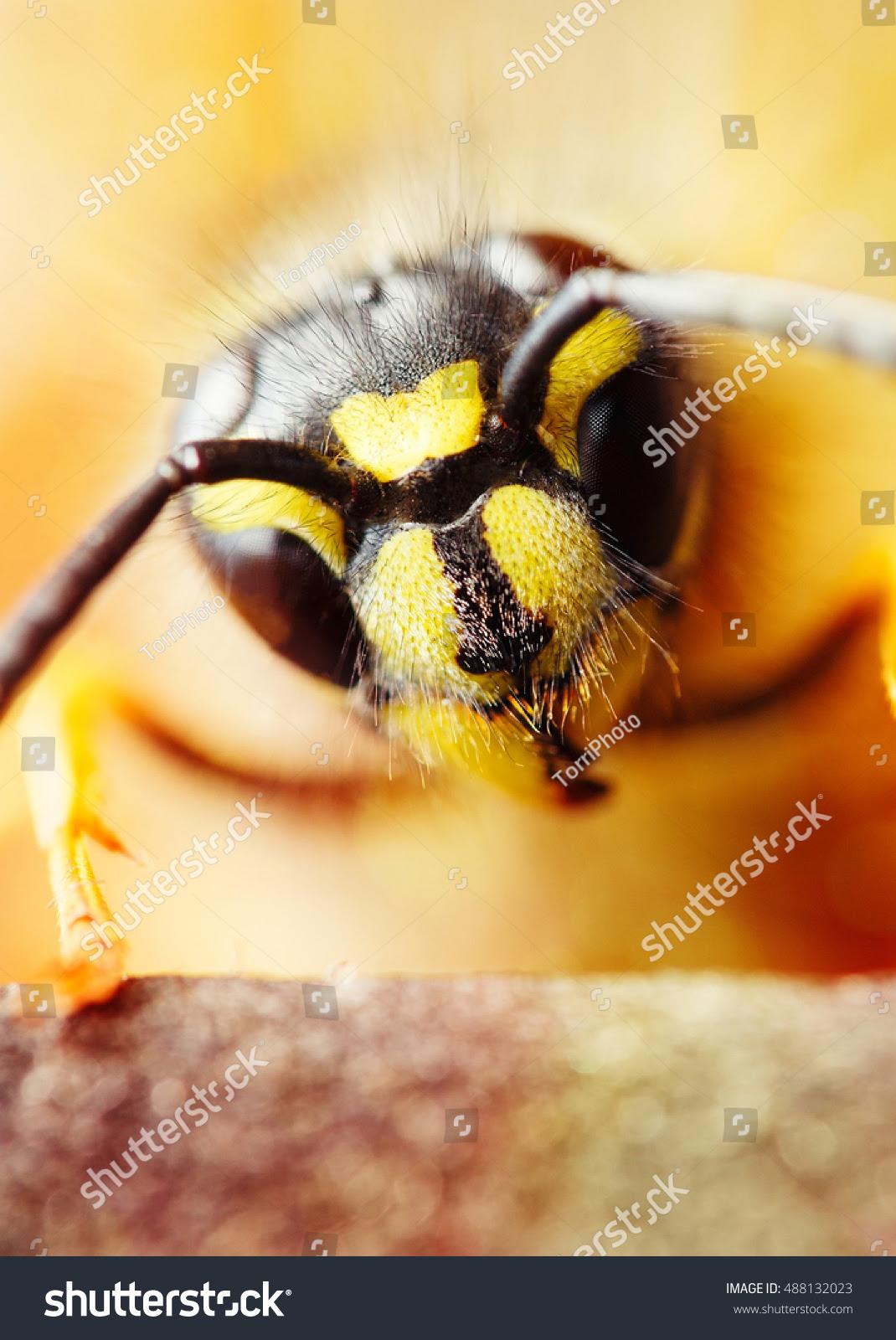 Super macro wasp head