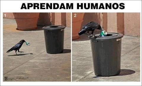 Aprendam humanos