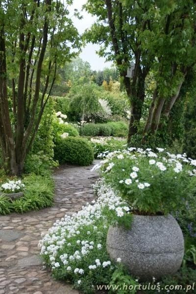 Clare Matthews Garden Blog Free Chive Edging Is Looking: GardenRant: White Garden
