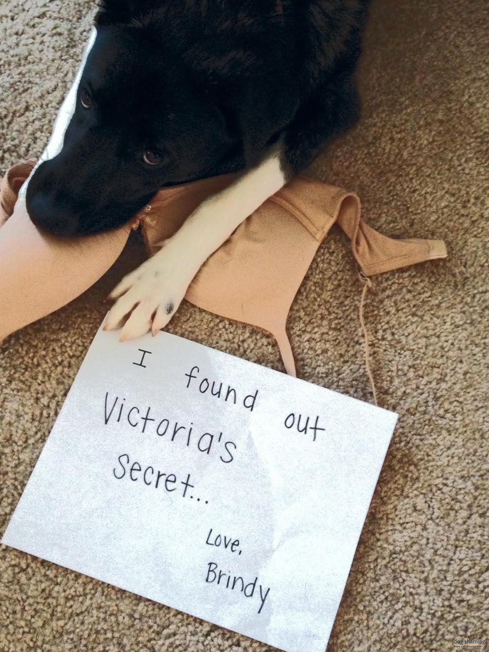 dog shaming 21 32 Hillarious Public Shaming of Dogs