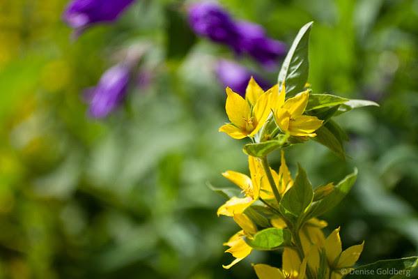 flowers, stephens-coolidge place