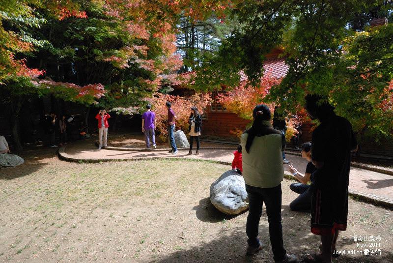 2011_1106福壽山農場DSC_3294
