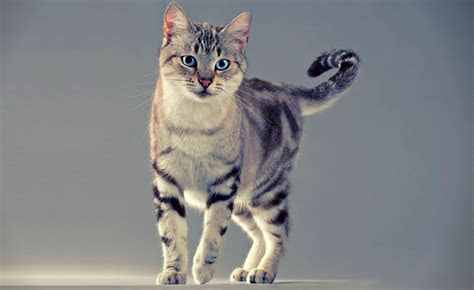 gambar kucing imut  lucu kumpulan gambar