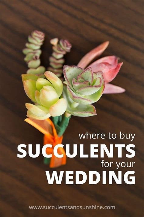 17 Best ideas about Succulents Online on Pinterest   Buy