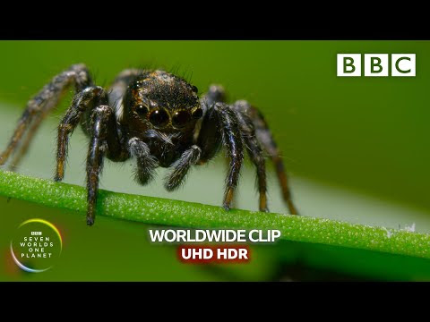 Mate or die trying! - Seven Worlds, One Planet   BBC Earth