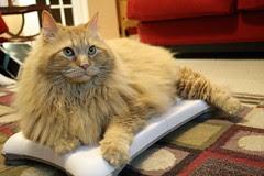 Jasper plays on the Wii Fit