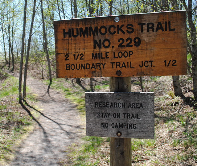 Hummocks Trailhead #229 - Mt St Helens