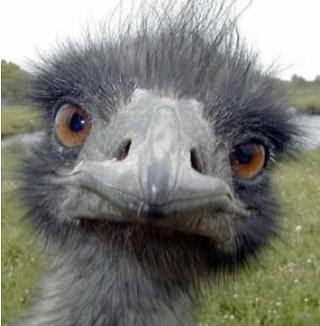 The ECB Ostrich Policy