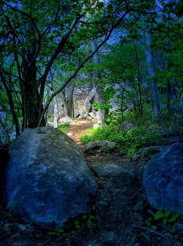 Mystical Day on the Appalachian Trail
