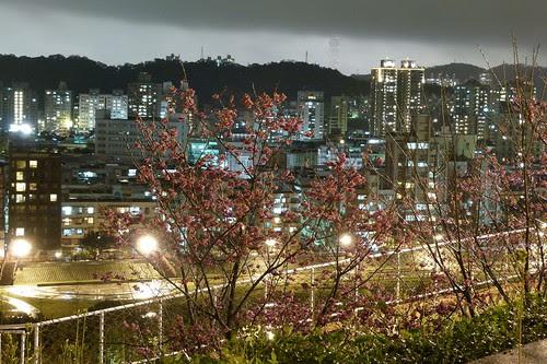 SAKURA in NCCU,Taiwan