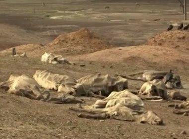 Itapetinga: Seca causa perda de 30 mil cabeças de gado e fazendas viram 'cemitérios'