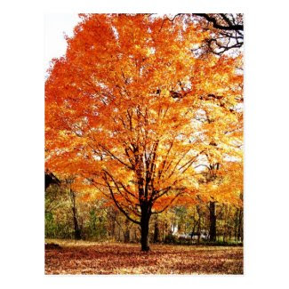 Autumn Leaves Thanksgiving Postcard Postcard