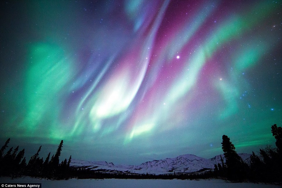 Les aurores boréales sont photographiés au-dessus des arbres du parc national et réserve de Denali en Alaska