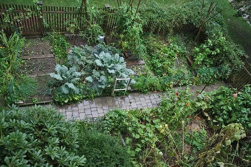 wet garden aerial