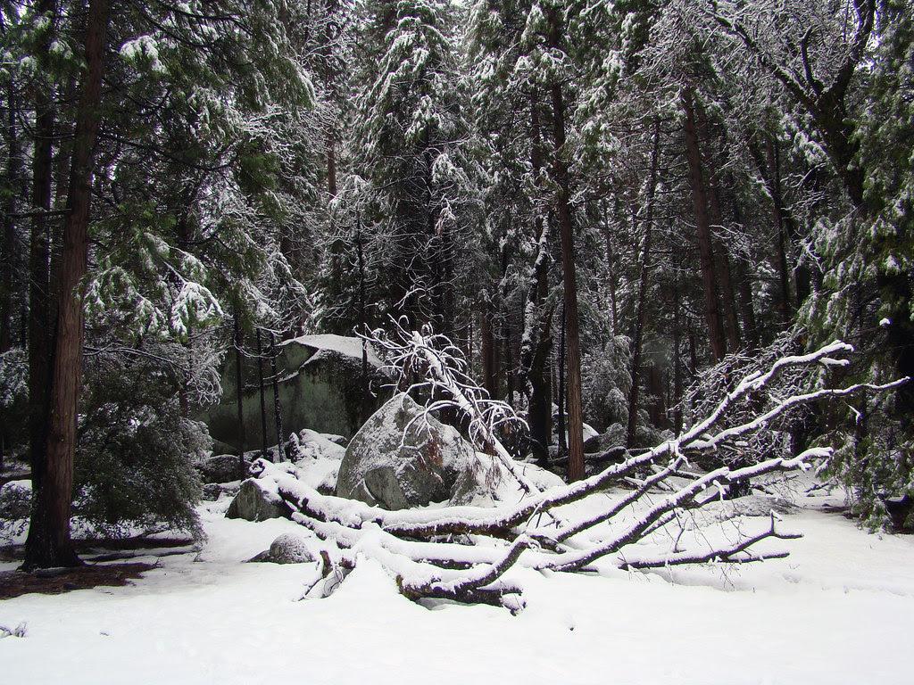 DSC04068 Yosemite granite boulders in snow