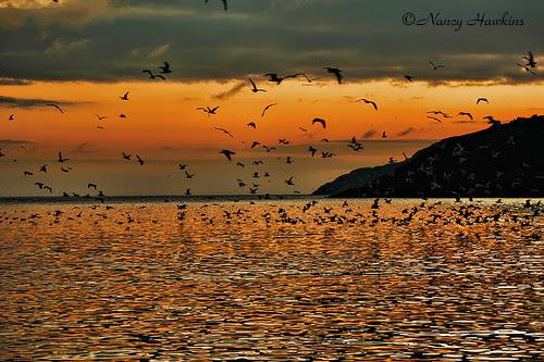 The Early Birds by Nancy Hawkins