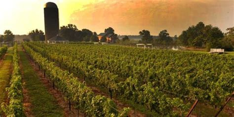 Doukenie Winery Weddings   Get Prices for Wedding Venues in VA