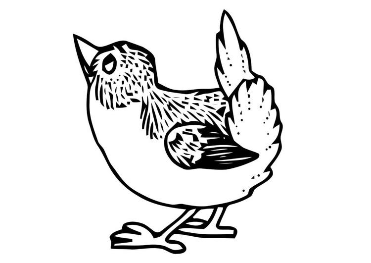 38 fliegender vogel malvorlage - besten bilder von