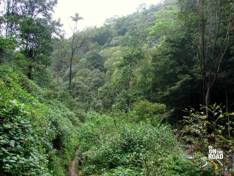 Tropical Forest Trail that leads to Hebbe Falls