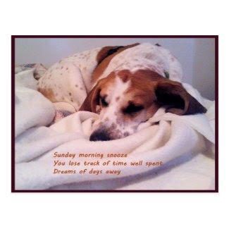 Sunday Morning Snooze Postcard