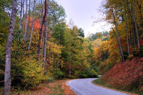 Autumn Road Home