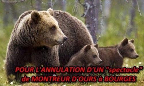 Pétition : Non au montreur d'ours le 11 et 12 juin à Bourges