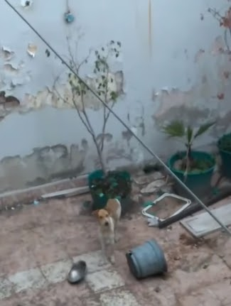 Rescatan al perro que estuvo durante semanas sin alimento en la intemperie y detienen a su dueña