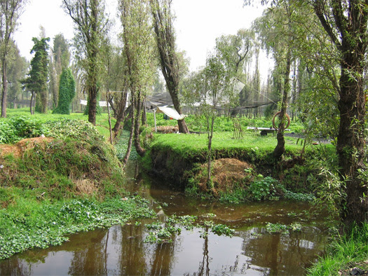Voices For Mother Earth Sustainability Over Centuries Las Chinampas Floating Islands Of Xochimilco