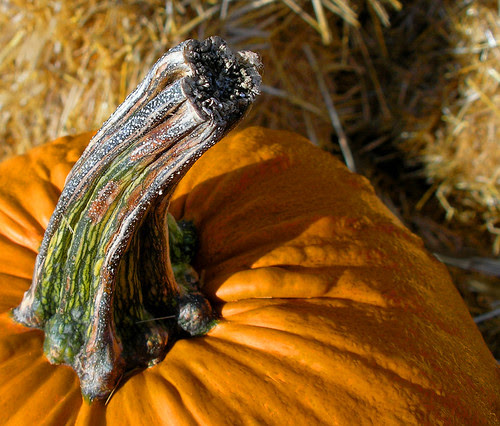 Pumpking stem