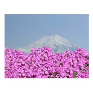 Fuji Behind Flowers ポストカード