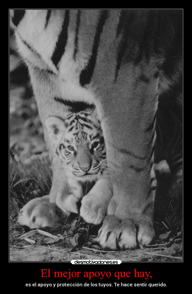 Imagenes Y Carteles De Tigre Pag 57 Desmotivaciones