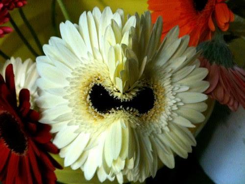Side By Side Week 85 - Evil flower