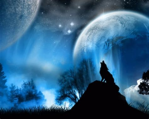 wolf  moonlight hd wallpaper hd latest wallpapers