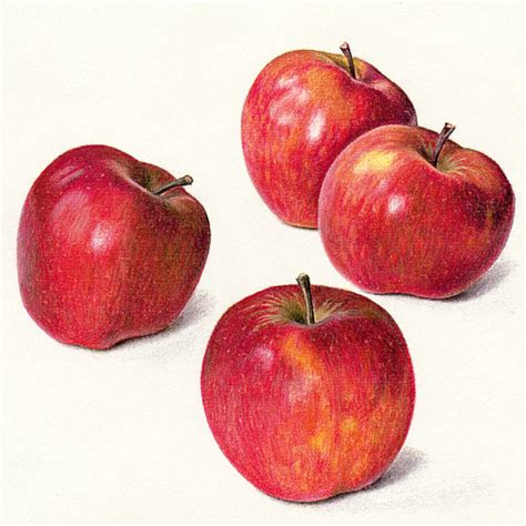 apples  life drawing  jean hands fruit