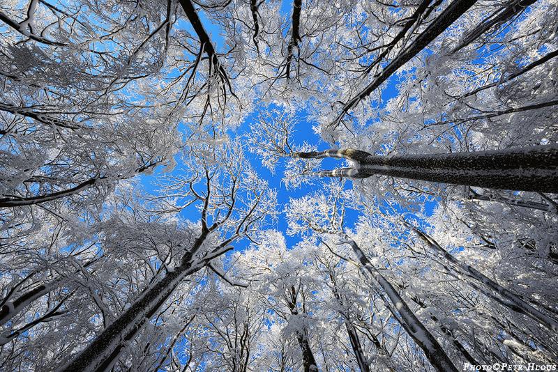 http://www.petrhlous.cz/photos/zimni-koruny-stromu-360.jpg