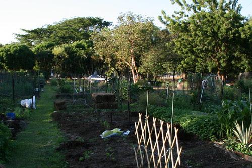 garden plots @ Jingli