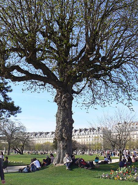 au pied de l'arbre, Tuileries.jpg