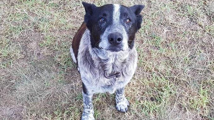 Así es como un perro sordo y medio ciego protegió a una niña perdida en las montañas